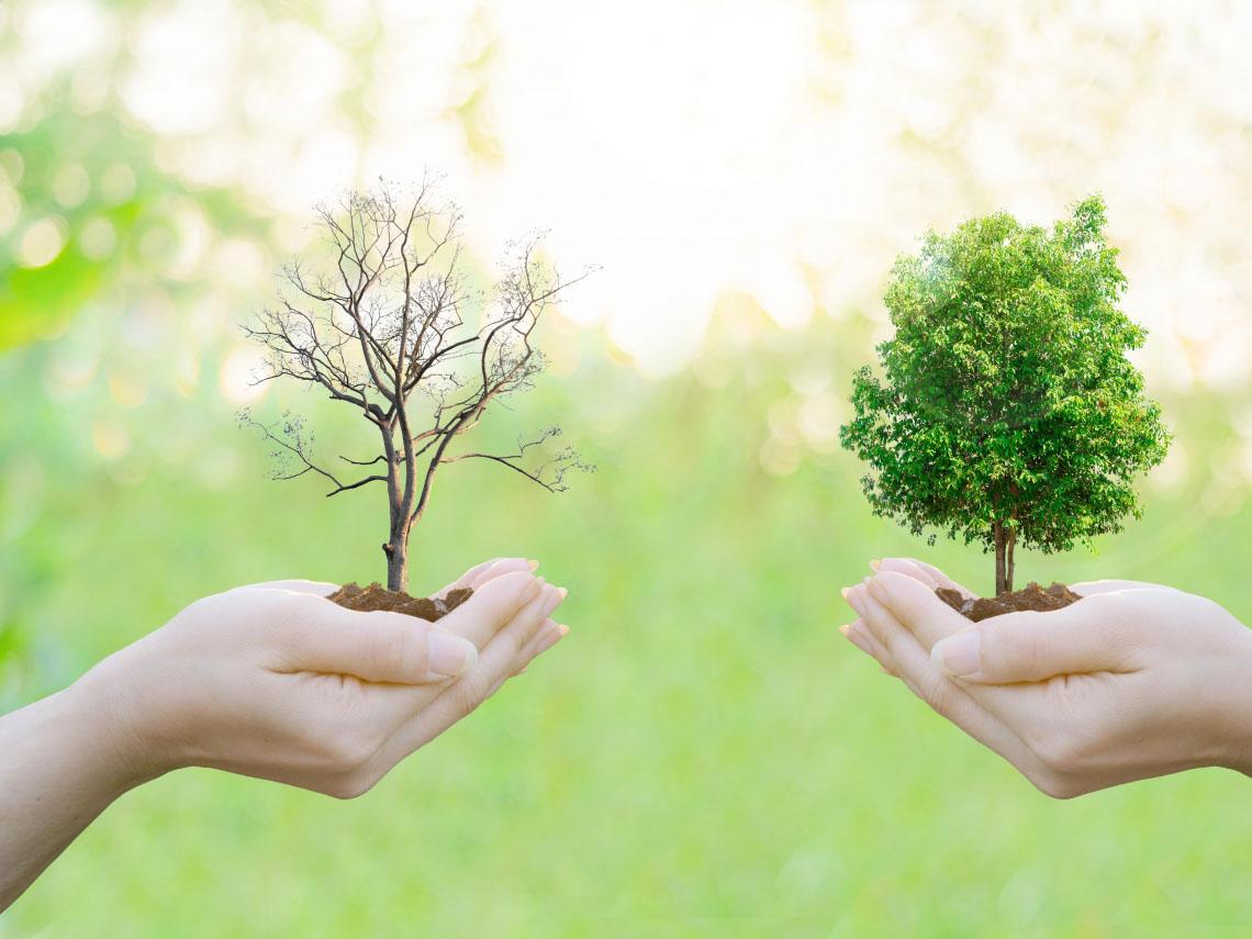 南京绿柚子环保科技有限公司