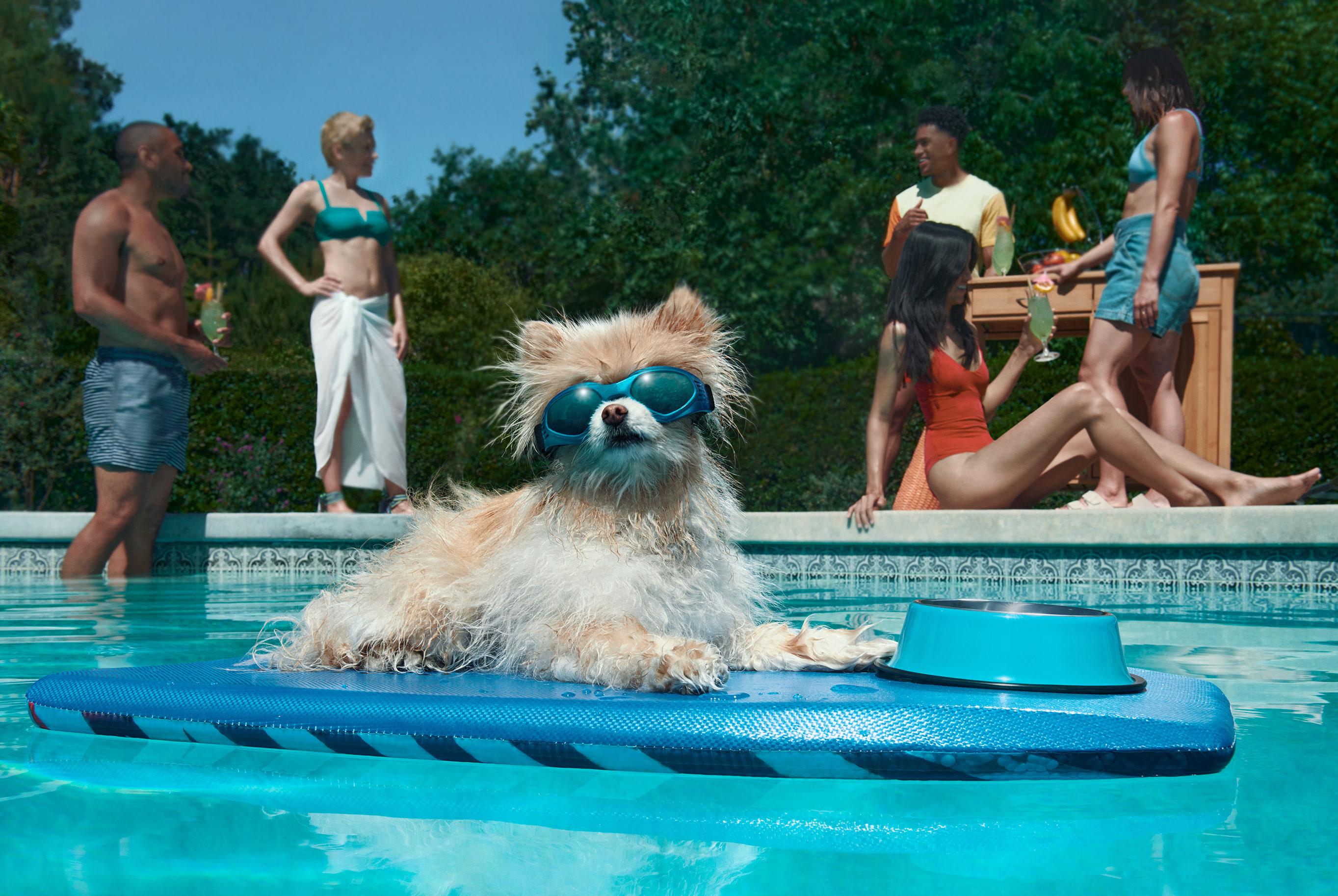 рекламная кампания успокаивающего лечебного CBD-средства для собак / фото 01