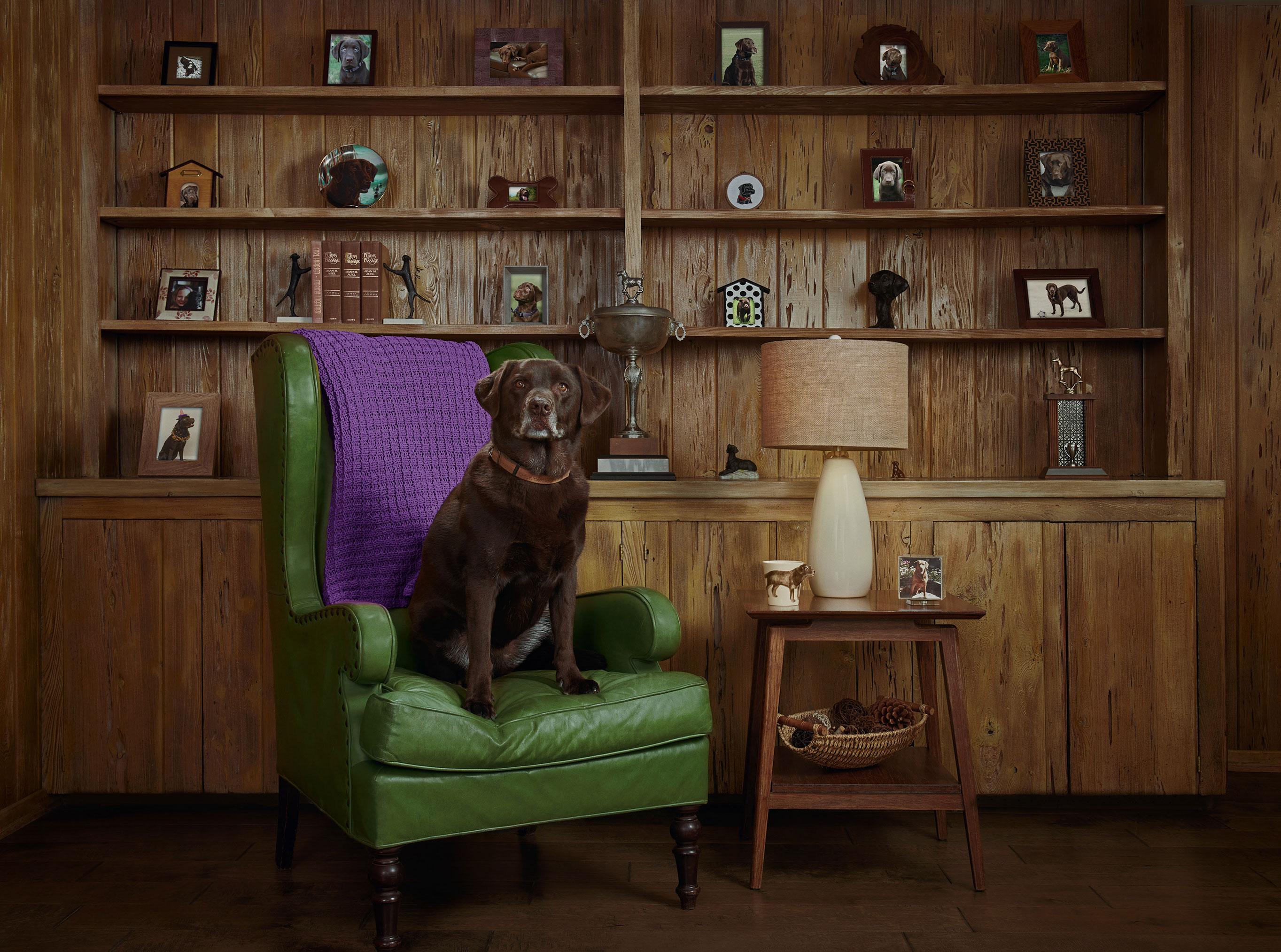 рекламная кампания успокаивающего лечебного CBD-средства для собак / фото 07